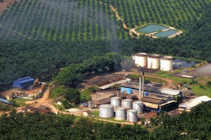 Lowongan Kerja Riau : Perusahaan Perkebunan Kelapa Sawit Maret 2017