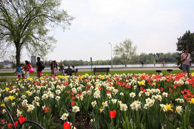 Canadian tulip festival Ottawa
