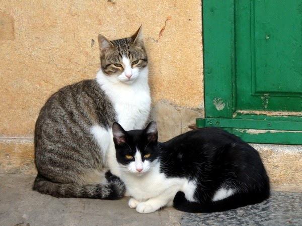 cats in deia
