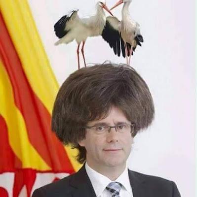 Carles Puigdemont ,cigonya, cigüeña, nido, niu