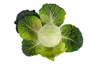 best foods for increasing collagen
