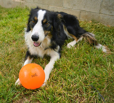 "Large 5"" diameter durable dog ball"