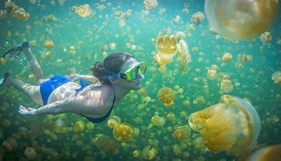 Menikmati Keindahan Kepulauan Derawan Di Kabupaten Berau MENIKMATI KEINDAHAN KEPULAUAN DERAWAN DI KABUPATEN BERAU, KALIMANTAN TIMUR