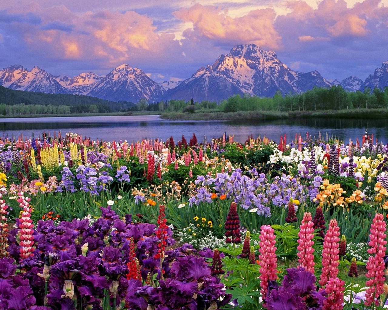 Taman Koleksi Wallpaper Pemandangan Alam