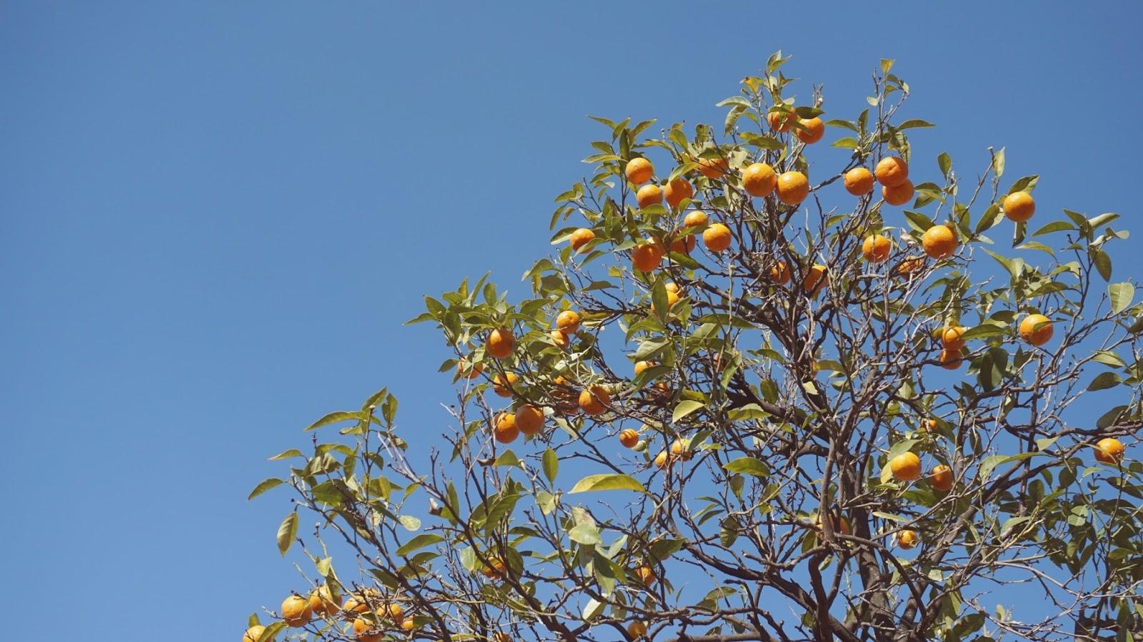 rzymskie pomarańcze, Rzym, podróż poślubna w Rzymie, gdzie na podróż poślubną