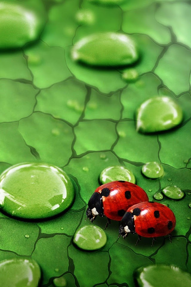 Ladybird  Galaxy Note HD Wallpaper
