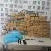 Polícia Militar realiza apreensão de mais de 200 kg de drogas em São Cristóvão