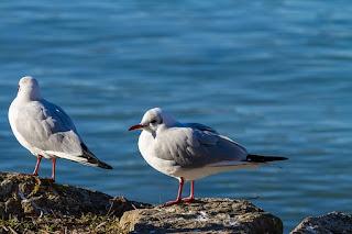 13 Ayat Al-Quran Tentang Burung