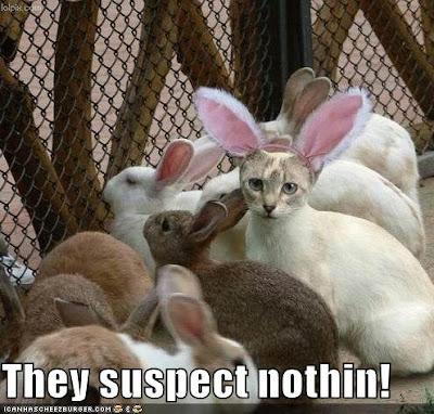 gatos disfrazados de conejos
