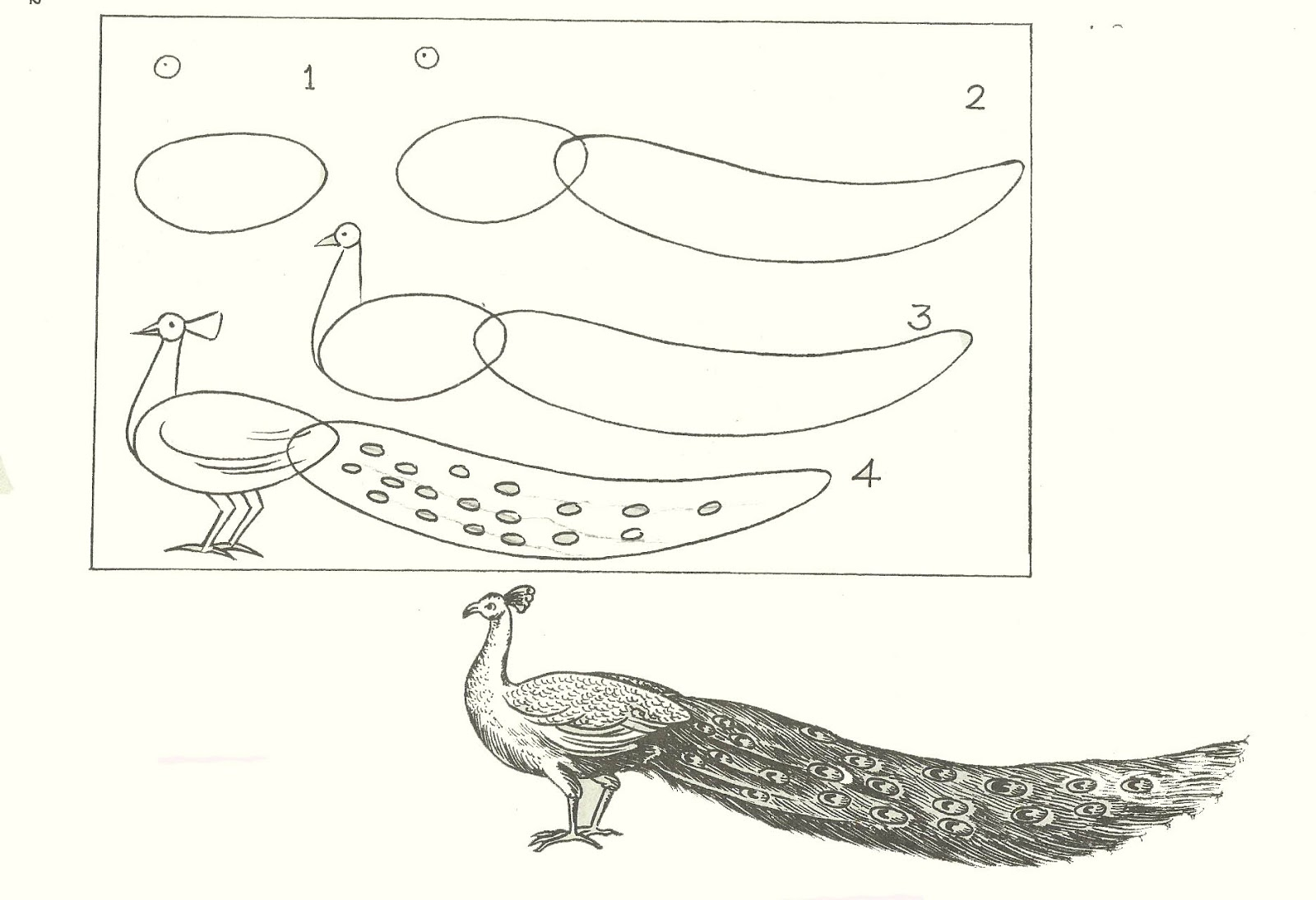 Studentsdrawing: ANIMAL STEP BY STEP EASY OUTLINE DRAWING