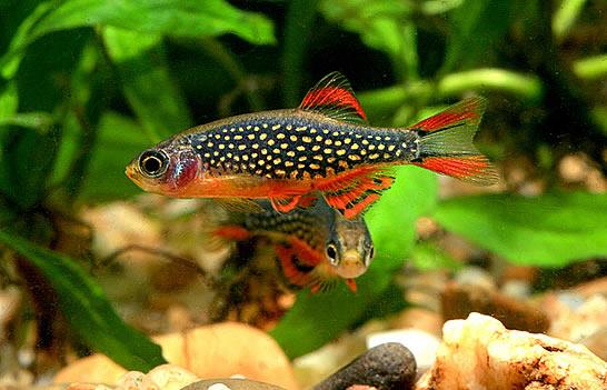 Betta Fish Awareness Day: Betta Fish Care: The Community