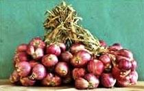 Bawang merah varietas Pikatan