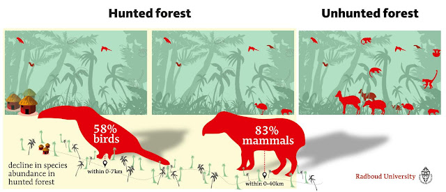 Hunting accounts for massive declines in tropical animal populations