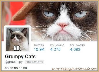 Grumpy Cats twitter follow | www.BakingInATornado.com