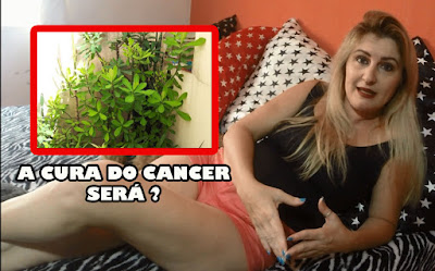 PLANTA QUE CURA O CANCER POR NINA DELLA ROSA