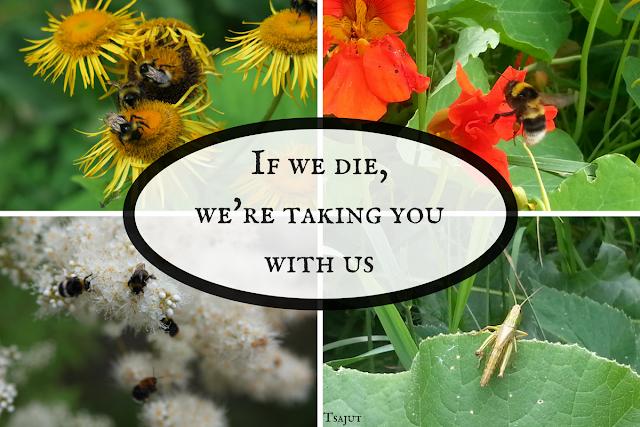 pölyttäjät, hyönteiset