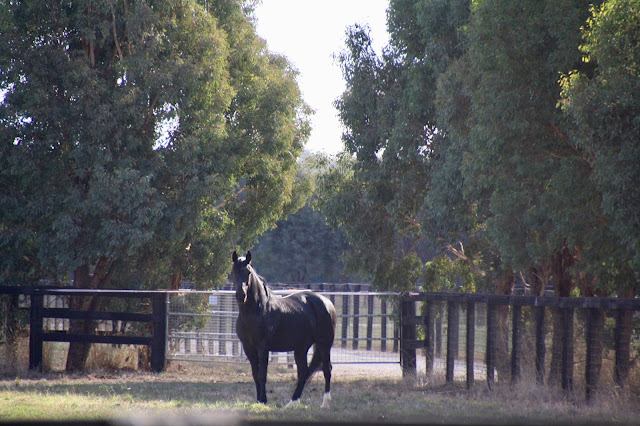 Nagambie Black Caviar Trail
