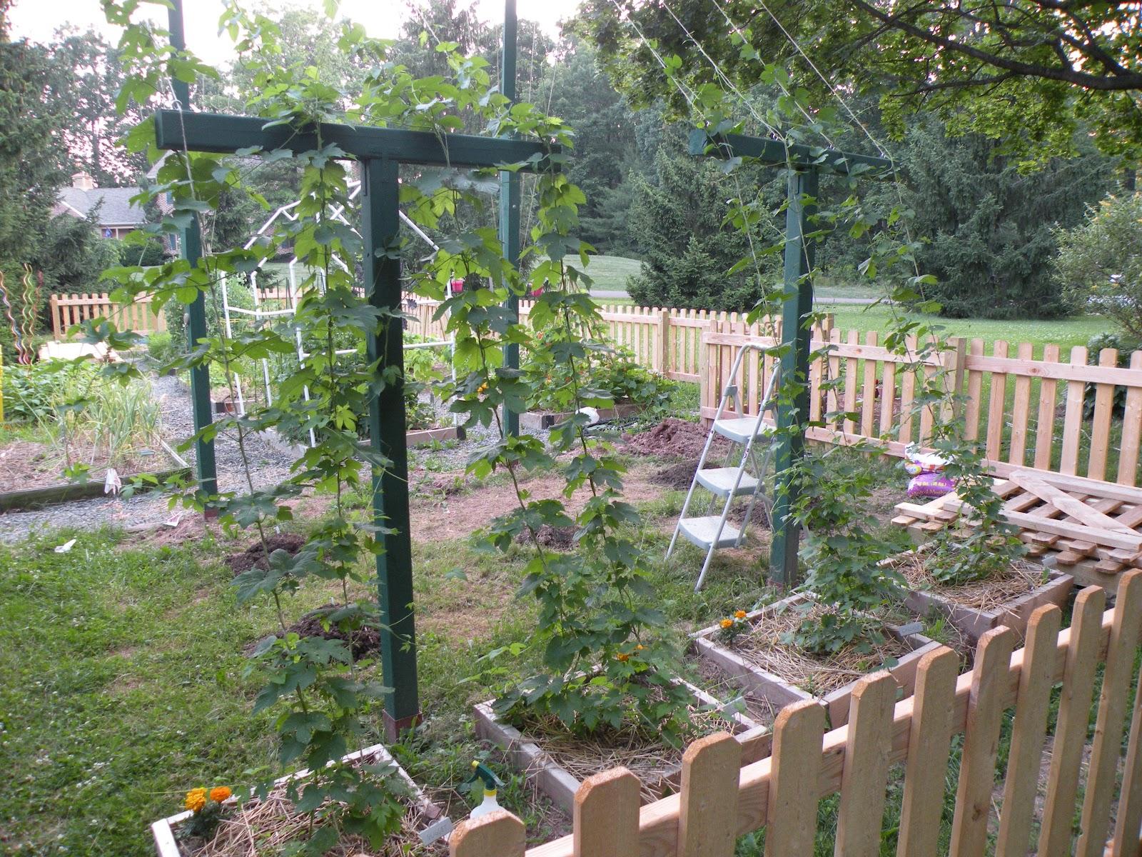 Harleysville Homestead Hop Trellis Build Part 2
