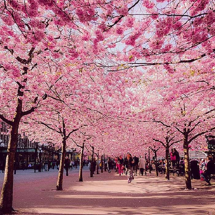 speed booster musim dan festval di jepang rh speedboo blogspot com musim yang ada di negara jepang 4 musim yang ada di jepang