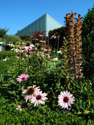 Echinacea coneflowers and Bear Breeches Acanthus hungaricus at the Toronto Botanical Garden by garden muses-not another Toronto gardening blog