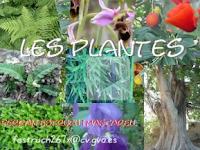 http://clic.xtec.cat/db/jclicApplet.jsp?project=http://clic.xtec.cat/projects/plantes2/jclic/plantes2.jclic.zip&lang=ca&title=Les+plantes
