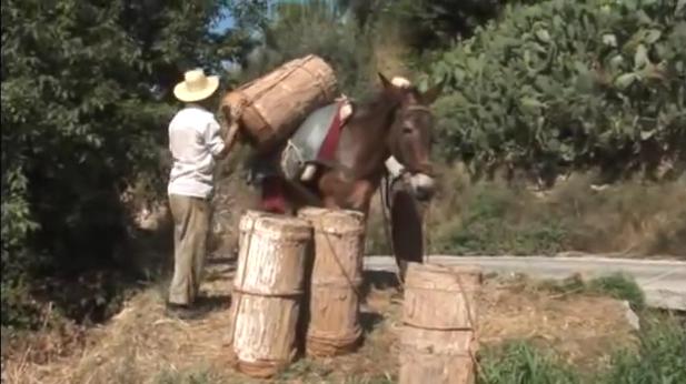 Επιστροφή στην παραδοσιακή μελισσοκομία στην Ισπανία... Ένα πολύ όμορφο βίντεο
