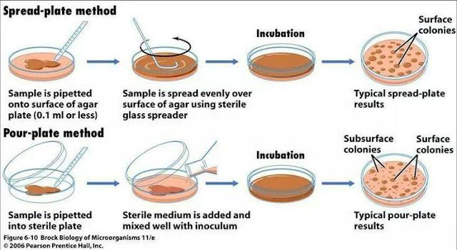 Fisiologi Pertumbuhan Pada Mikroorganisme Bagian 2 - Pertumbuhan Mikroorganisme