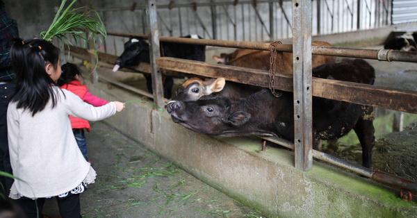 彰化花壇|大山休閒牧場|免門票,親子同遊好去處,還可以餵牛吃草、擠奶