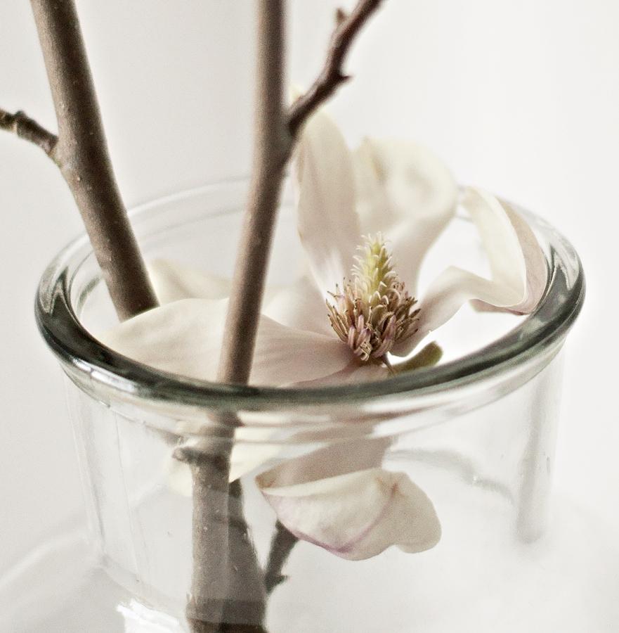 aufgeblühte Magnolie in der Vase