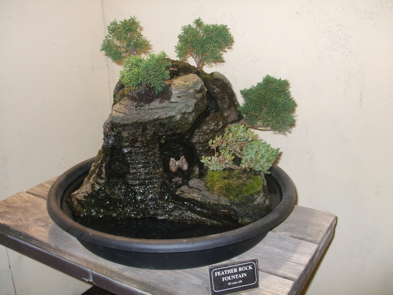 Rosemary39s Sampler Bonsai