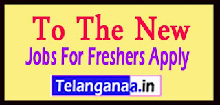 To The New Recruitment 2017 Jobs For Freshers Apply