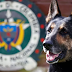 ΝΕΚΡΟ Ή ΑΙΧΜΑΛΩΤΟ! Αστυνομικό σκύλο επικήρυξε διαβόητο καρτέλ ναρκωτικών...