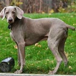تعرف على أنواع الكلاب بالصور