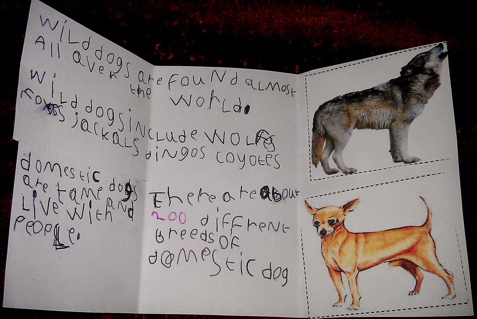 Iman S Home School Dogs Lapbook And Unit Study