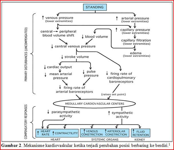 92591860 Autoregulasi Dan Pengaruh Pco2 Terhadap Aliran Darah Otak (1)