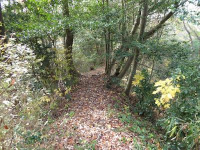 くろんど池 ふれいの森 遊歩道