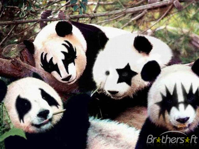 Animals i admire kiss pandas - Free funny animal screensavers ...
