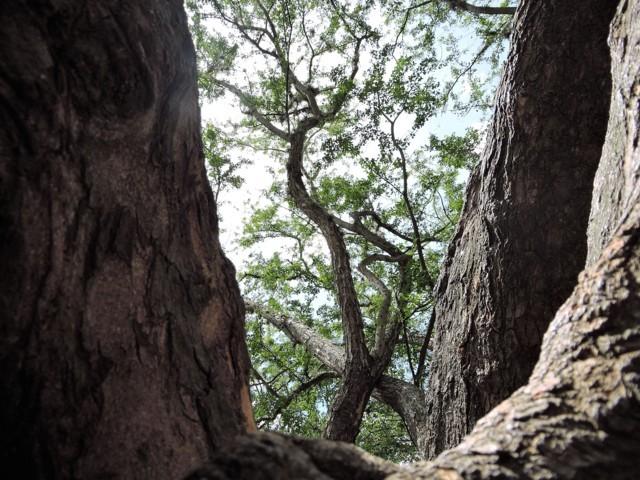 Árbol desde otra perspectiva