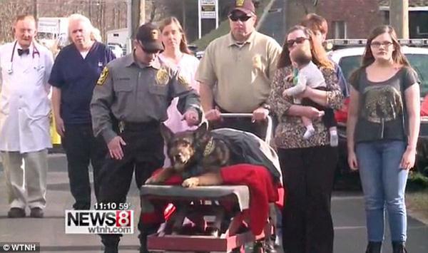 """Cảnh sát và người dân Mỹ xếp hàng chào vĩnh biệt """"chú chó anh hùng"""" sắp lìa đời"""