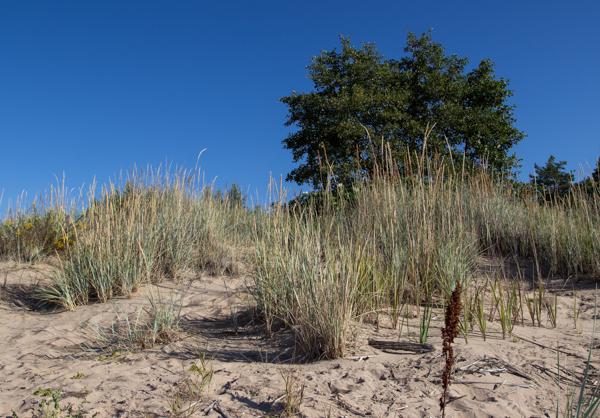valkoinen hiekka uimarannalla hiekkadyynit suomessa