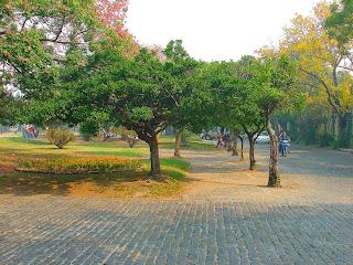 Árvores em Torno da Praça Central de Colonia Del Sacramento