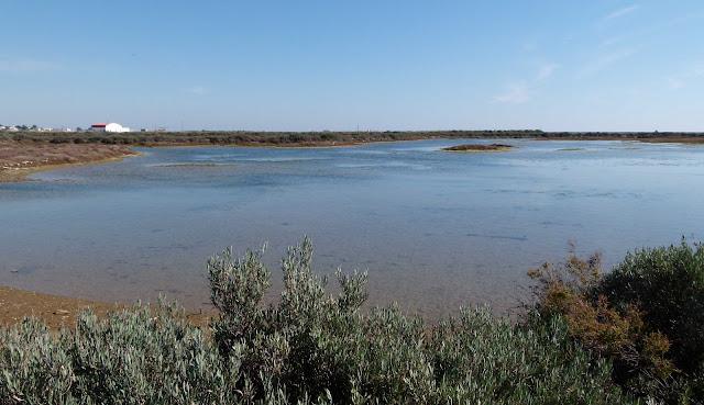 Parque Natural Da Ria Formosa 106