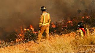 Incendios forestales: Colegio de Periodistas llama a la ciudadanía a informarse a través de fuentes comprobables