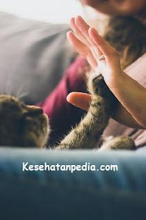 Manfaat Memelihara Kucing di Rumah bagi Kesehatan