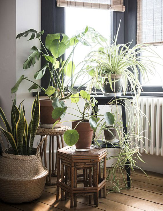 ideas para decorar rincones con plantas