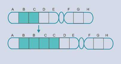 Evaluasi pemahaman kau wacana konsep dasar Mutasi Soal Latihan dan Jawaban Mutasi Gen Kromosom