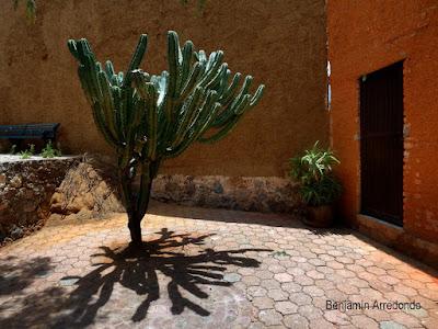 ¿Habrá una planta más mexicana que el Garambullo?. Noticias en tiempo real