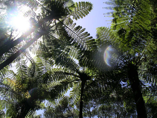 PLANT LISTS FOR THE DAIRY TREE FERN DESIGN