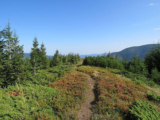Студёный верх - polany pokryte rudziejącymi borówczyskami.