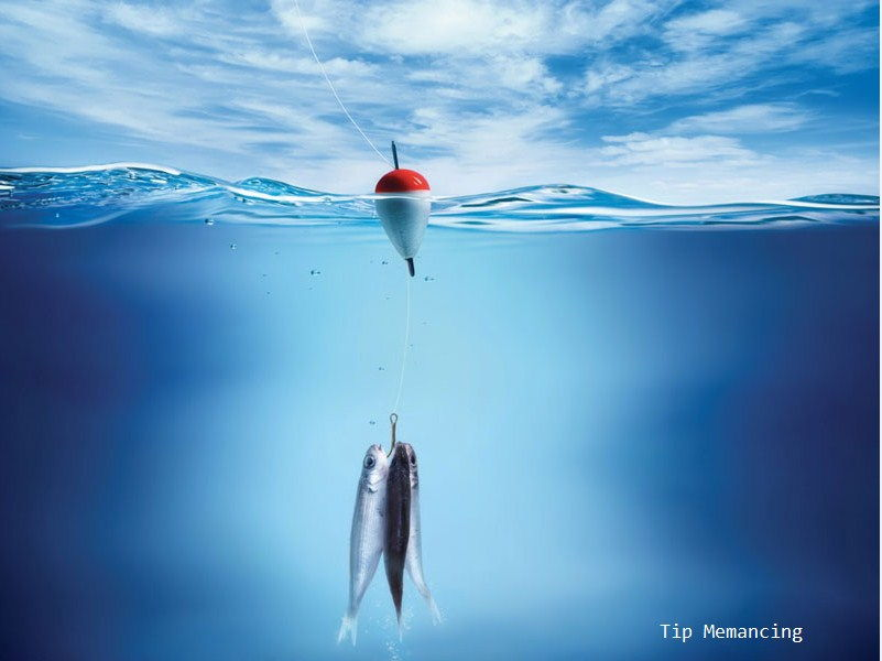 Pelampung Memancing Ikan Patin